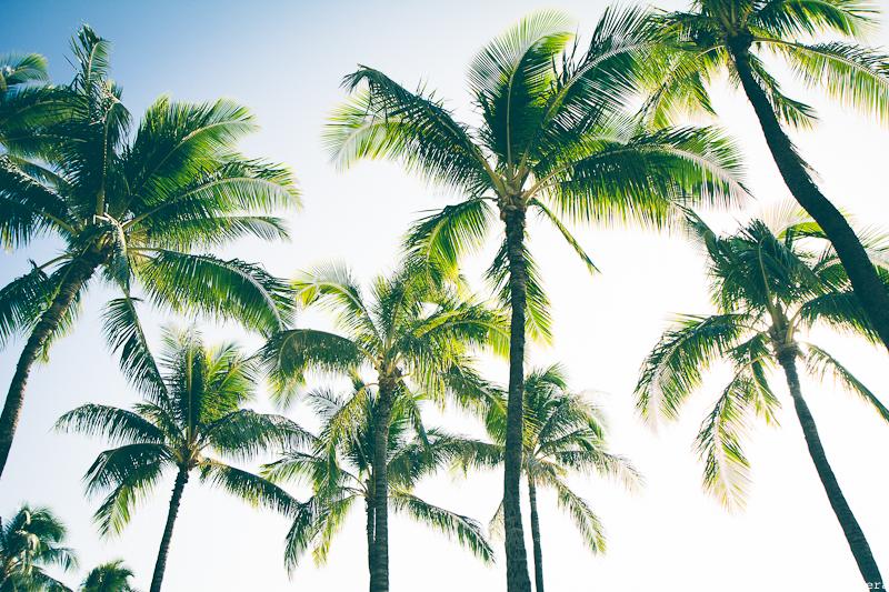 The Magic Camera - Hawaii (3 of 102)
