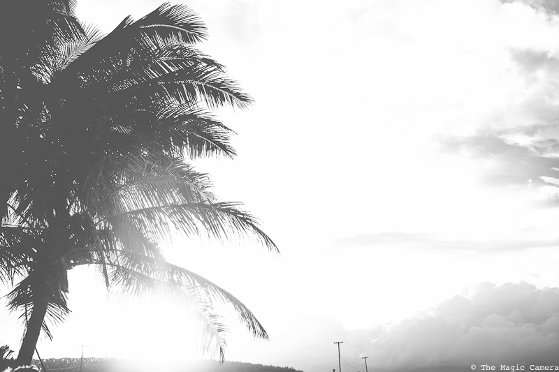 The Magic Camera - Hawaii (51 of 102)