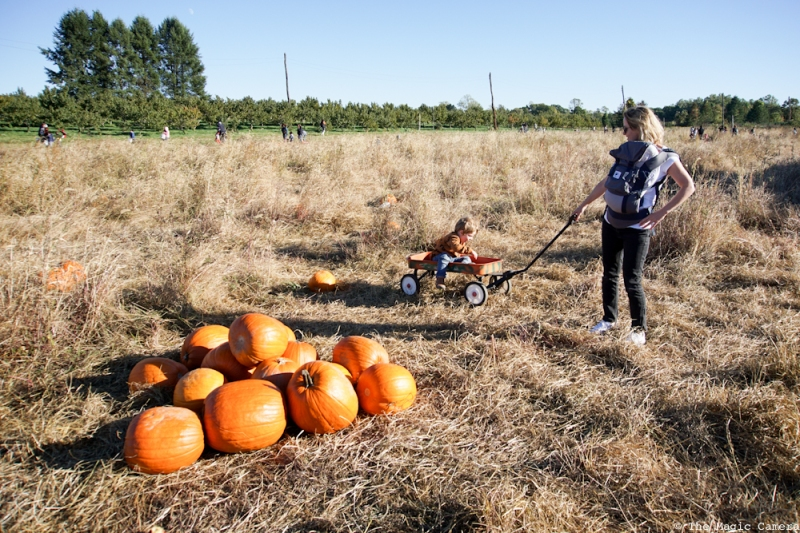pumpkin-patch-oct-2016-10