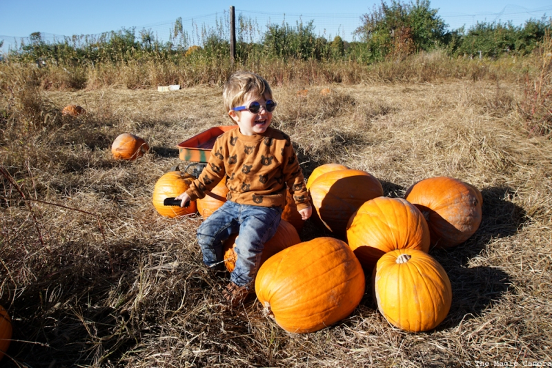 pumpkin-patch-oct-2016-19