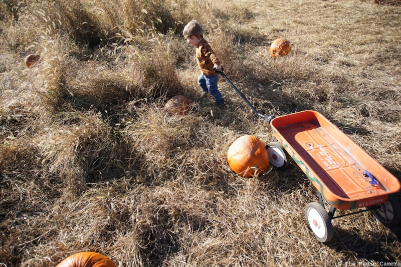 pumpkin-patch-oct-2016-24