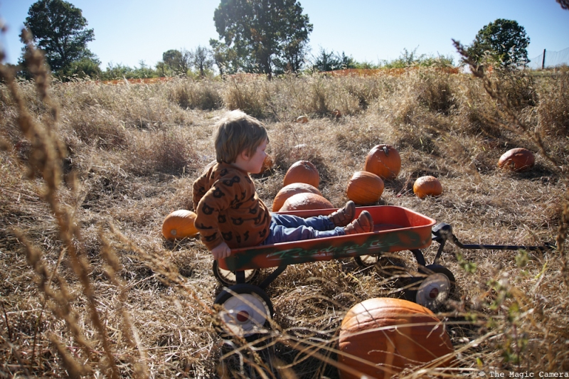 pumpkin-patch-oct-2016-25