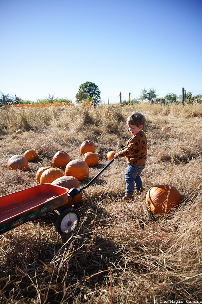 pumpkin-patch-oct-2016-27