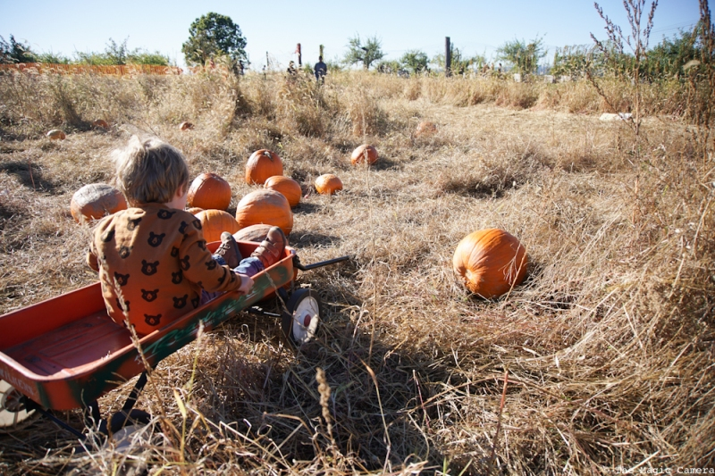 pumpkin-patch-oct-2016-29