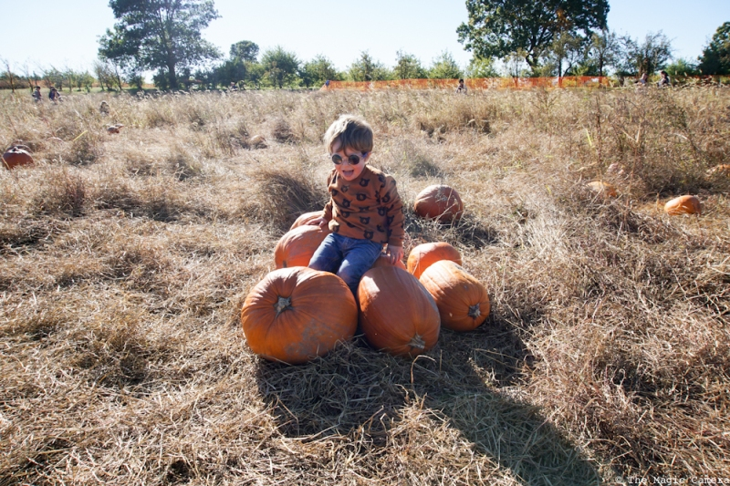 pumpkin-patch-oct-2016-30