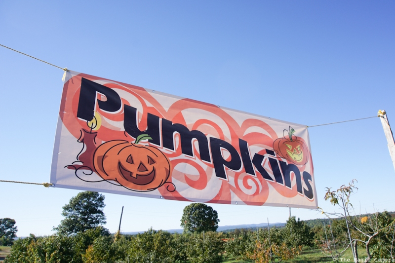 pumpkin-patch-oct-2016-33