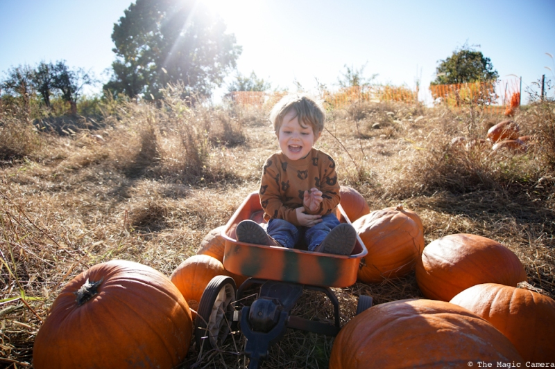 pumpkin-patch-oct-2016-7