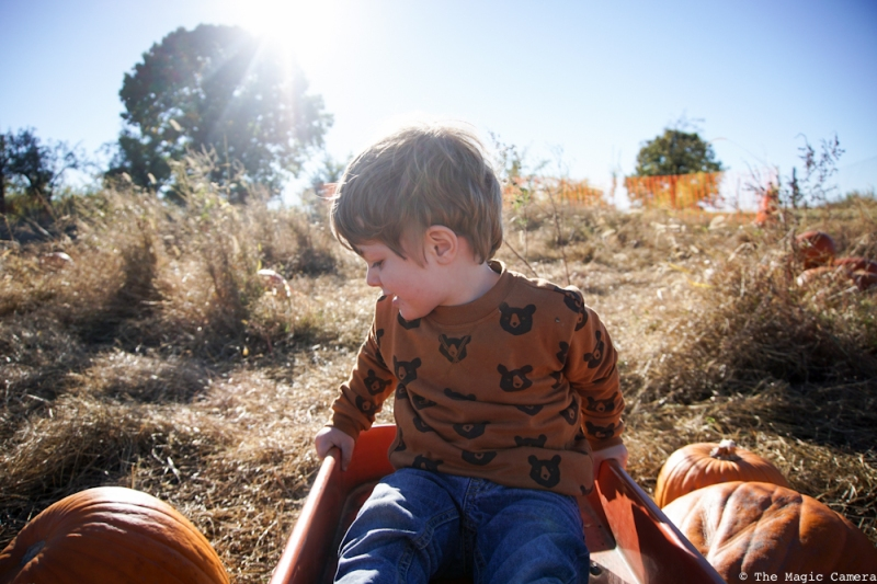 pumpkin-patch-oct-2016-8