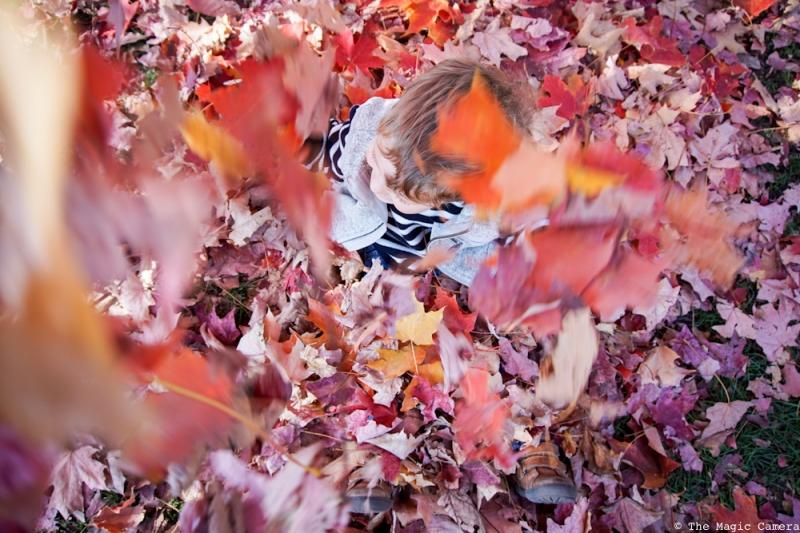 autumn-oct-2016-11