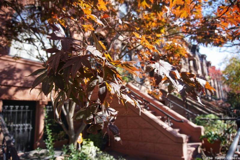 autumn-oct-2016-3